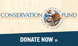 Donate to the SeaWorld & Busch Gardens Conservation Fund