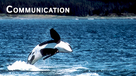 Communication and Echolocation